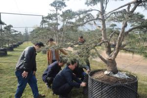 市林木种苗工作站开展林木种苗质量管理专项检查